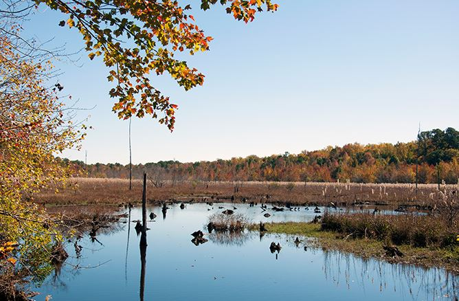 Greensprings wetlands in Fall